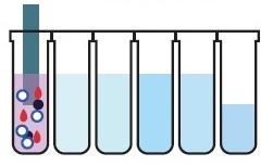 M8-H サンプルと磁気ビーズの混合磁気ビーズとDNAの結合