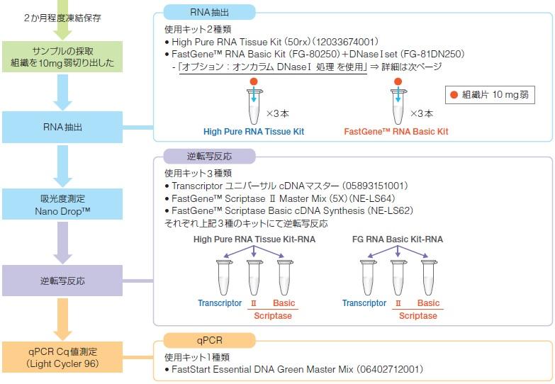 お客様事例】マウス肝臓からの「RNA抽出」および「逆転写反応」に用 ...