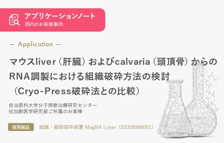 【お客様事例】マウスliver(肝臓)およびcalvaria(頭頂骨)からの RNA調製における組織破砕方法の検討 (Cryo-Press破砕法との比較)