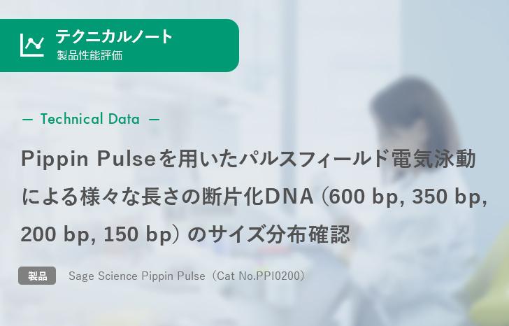 【製品性能評価】Pippin Pulseを用いたパルスフィールド電気泳動による様々な長さの断片化DNA(600 bp, 350 bp, 200 bp, 150 bp)のサイズ分布確認